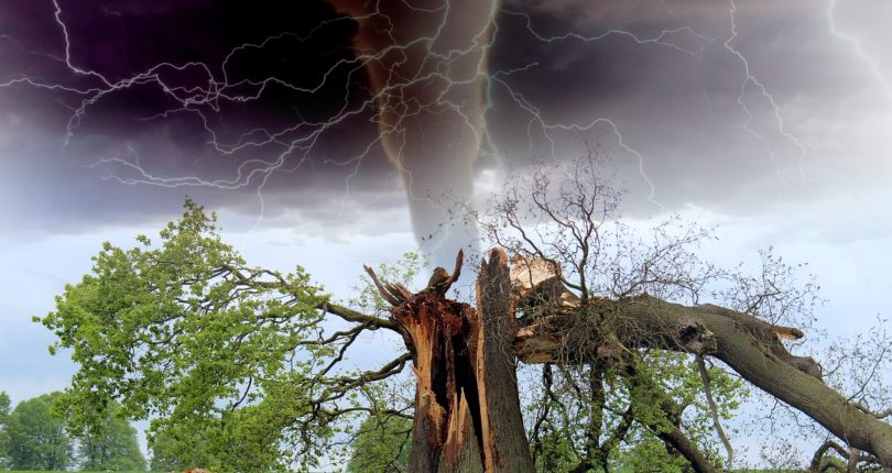 The Cost of Storm Damage…              Storm Damage to Trees, and the Damage Trees can do to Buildings